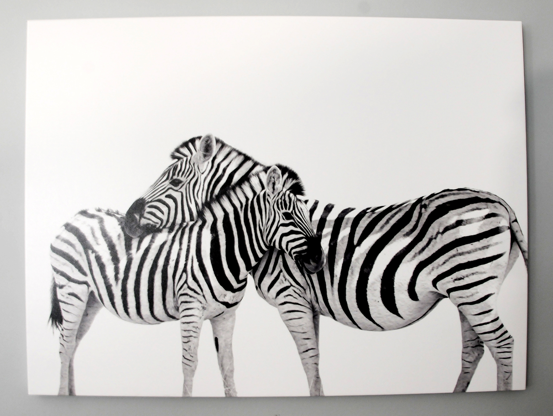 Zebra obsession rsvp paper co zebra canvas 2 rsvp paper co altavistaventures Image collections