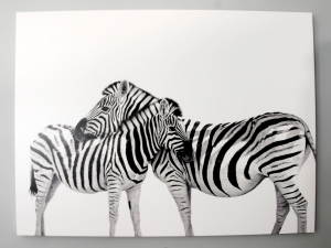 Zebra-Canvas-2-_-RSVP-Paper-Co